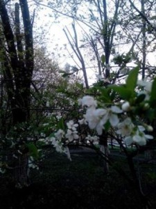 фото в 6 утра - вишня
